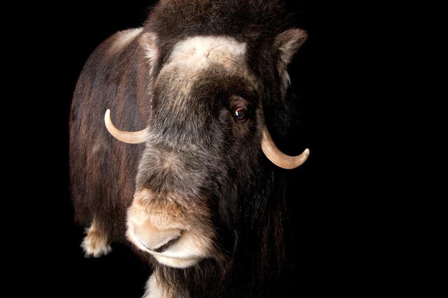濒危动物的艺术照