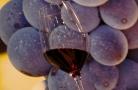 意大利維羅納葡萄酒展